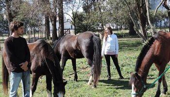 Terapia con animales: un vínculo sanador con los caballos