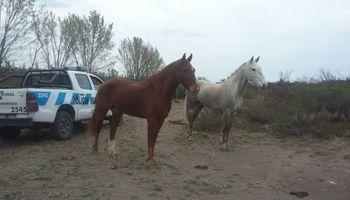 Denuncian una fuerte ola de inseguridad rural en Mendoza