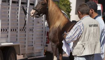 Alerta en Córdoba por la presencia de anemia infecciosa equina
