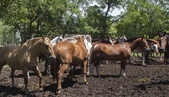 Brasil alertó por un equino enfermo con virus del Oeste del Nilo