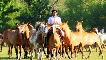 Se vienen los caballos con DNI y chips en la provincia de Buenos Aires