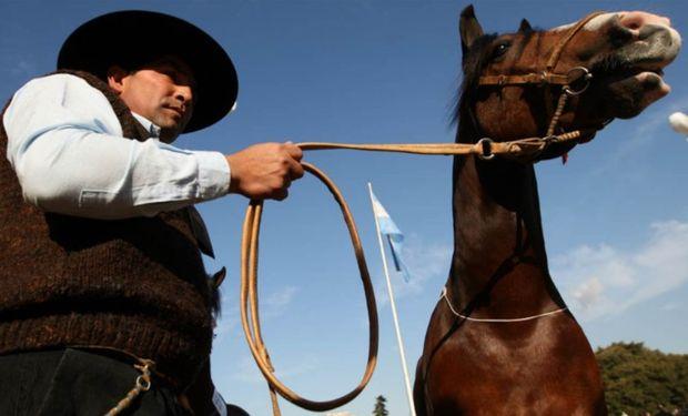 El caballo criollo, presente desde la época de la colonia.