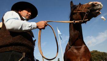 El caballo criollo fue declarado caballo nacional y patrimonio cultural