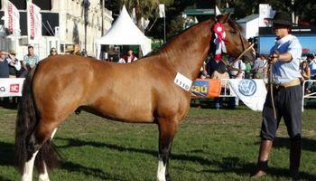Pagaron US$ 100 mil por el 80% de un caballo Criollo uruguayo