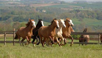 Buscan promover la exportación de caballos argentinos