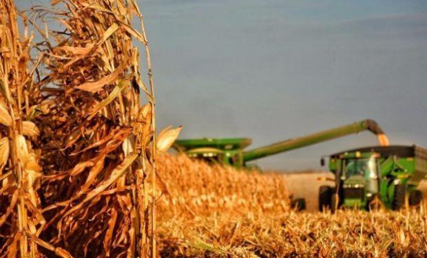 """""""A los maíces de primera no le faltan mucho más que 10 a 15 días para iniciar la trilla de los primeros cuadros"""", comentaron desde la BCR."""