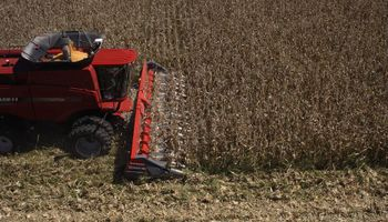 El cabezal maicero de Mainero es revolución en cosecha