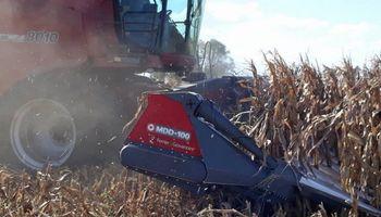 Para minimizar pérdidas en cosecha de maíz, aseguran que el foco debe estar puesto en el cabezal