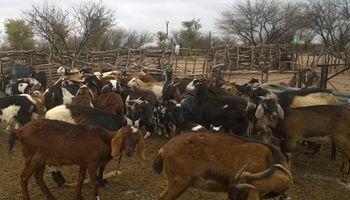 La carne de cabra atrae a la gastronomía mendocina