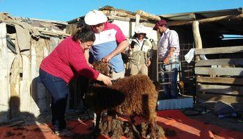 Promueven la producción de hilo con pelo de cabra colorada en La Pampa