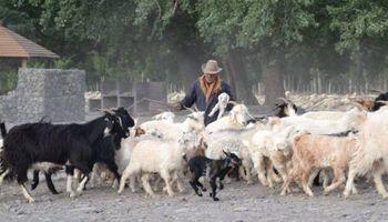 Técnicos y productores caprinos de Neuquén buscan alianzas en sudáfrica