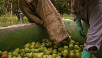 Agroindustria destinará $540 millones para la cadena frutícola del Alto Valle
