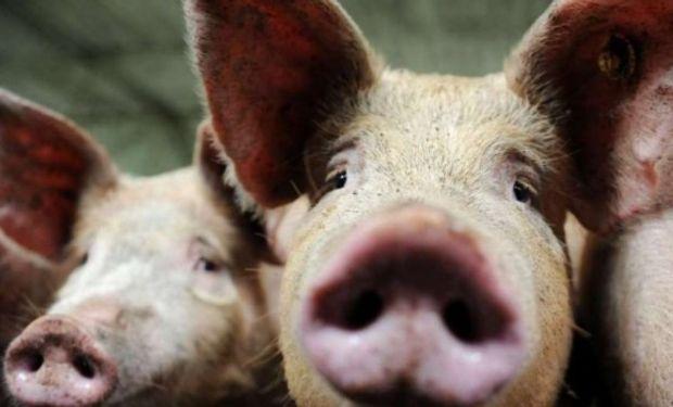 Desde Arizmendi explican que el registro se crea con el fin de facilitar y transparentar el comercio de hacienda y carne porcinas.