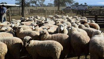 ArgenCarne: la cadena ovina con desafíos muy claros para crecer