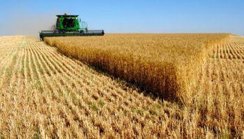Cae el rendimiento promedio del trigo y la producción pierde 300 mil toneladas en la zona núcleo