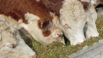 Producción de carne cayó 10,1% en abril