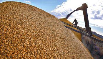 Preocupa la caída de la proteína de soja