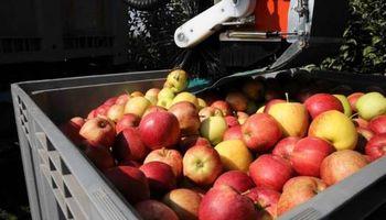 Fruticultura: advierten que se pierde calidad por deficiencias de calcio
