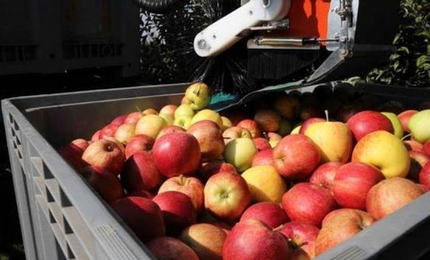 Deficiencias de calcio deterioran la calidad de la fruta y su valor nutricional.