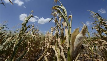 Banco Mundial: calor perjudicará cultivos en 2050