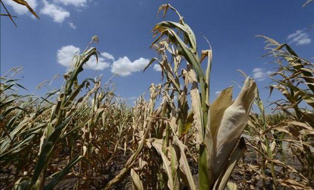 Las temperaturas promedio ya han subido cerca de 0,8 grado desde la Revolución Industrial.