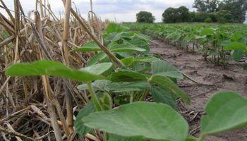 ¿Cómo reducir hasta un 84 % las pérdidas de suelo?