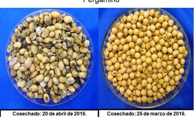 Contrastes entre antes y después de la contingencia para el grano.