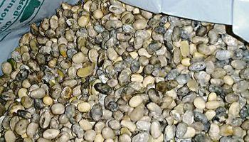 Soja: productores advierten por la baja calidad del grano