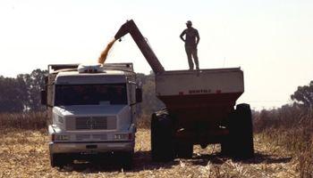 Relevamiento de calidad de trigo: qué indican los primeros resultados