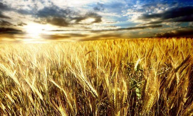 Destacan que en varias regiones no se logró la proteína óptima por los excesos de lluvias.