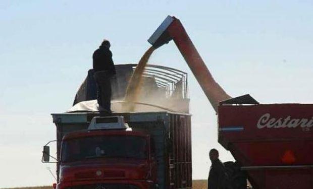 Hubo zonas en el centro de la provincia de Santa Fe caracterizada por granos de bajo peso hectolítrico, lo que se traduce en granos que darán bajo rendimiento en harina.