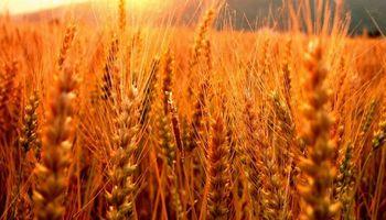 Con más calor se necesita otra agricultura