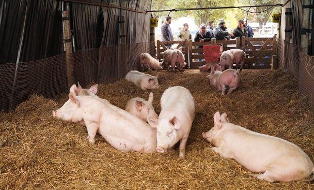 Se presentó Rosporc, la plataforma digital de negociación en el mercado de cerdos