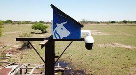 Ofrecen cámaras para el campo que funcionan sin energía eléctrica y transmiten sin internet: cuánto cuestan