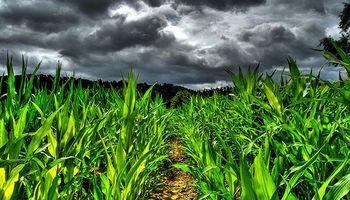 ¿Cómo transformará el cambio climático la agricultura mundial?