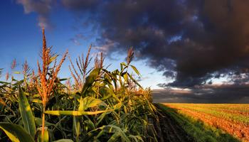 El cambio climático favorecerá a los cultivos