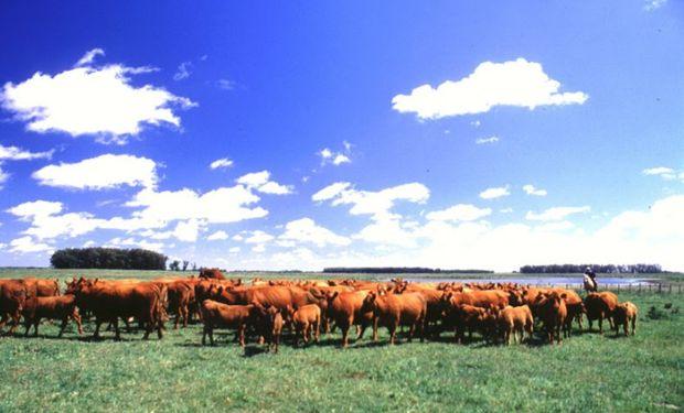 Análisis descriptivo de las acciones ambientales específicas en carne vacuna que se encuentran en desarrollo en Argentina.