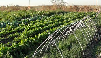Crean un programa nacional de horticultura para fomentar políticas públicas
