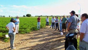 Cambio Rural: piden informe del programa en el Senado