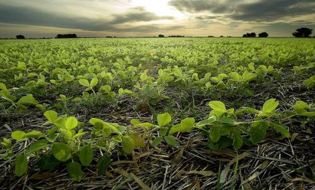 La soja es el cultivo que está en la cabeza de productores y técnicos.