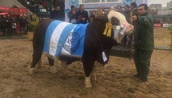 Mirá el toro Braford que se consagró Gran Campeón Macho en la Rural