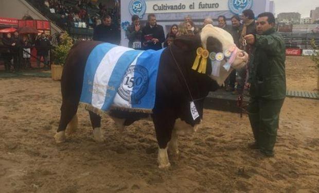 El Gran Campeón Macho Braford. Foto: La Nación