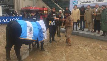 Brangus: dos cabañas de Córdoba se quedaron con el Gran Campeón Hembra y la Reservada