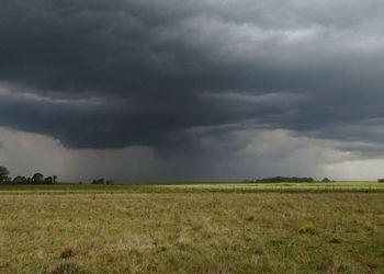 El trigo y el maíz, los grandes ganadores tras las lluvias: cómo se reposiciona la zona núcleo