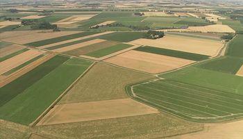 Destacan el valor de la mejora genética para la competitividad de la agricultura argentina
