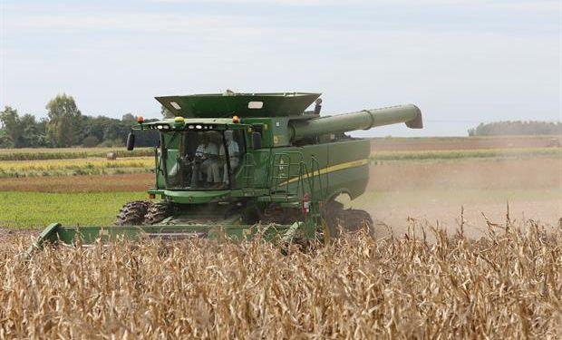 Si bien cayó el valor bruto global de la cosecha, en maíz hubo un aumento del 11 por ciento.