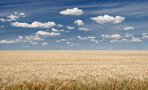 Buenas expectativas para el trigo bonaerense