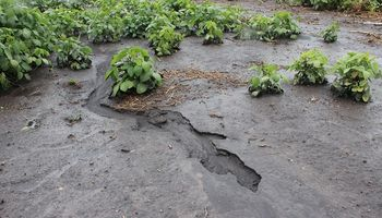 Las 5 razones por las hay que proteger el suelo de la erosión