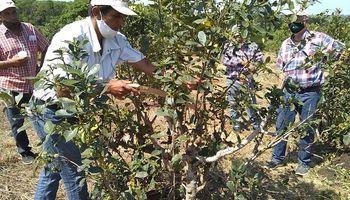 Trabajadores agrarios: plan de Regularización Registral