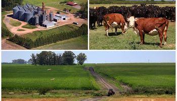 43.000 hectáreas:cómo hizo un gigante argentino para reconvertir su negocio multimillonario